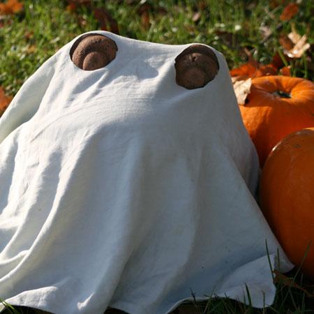 ghost-frog.jpg