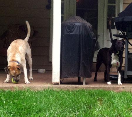 gloomy-day-dogs-2